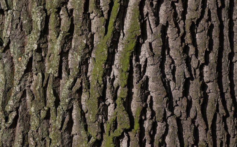 Śliczny oraz {schludny zieleniec to nie lada wyzwanie, przede wszystkim jak jego konserwacją zajmujemy się sami.